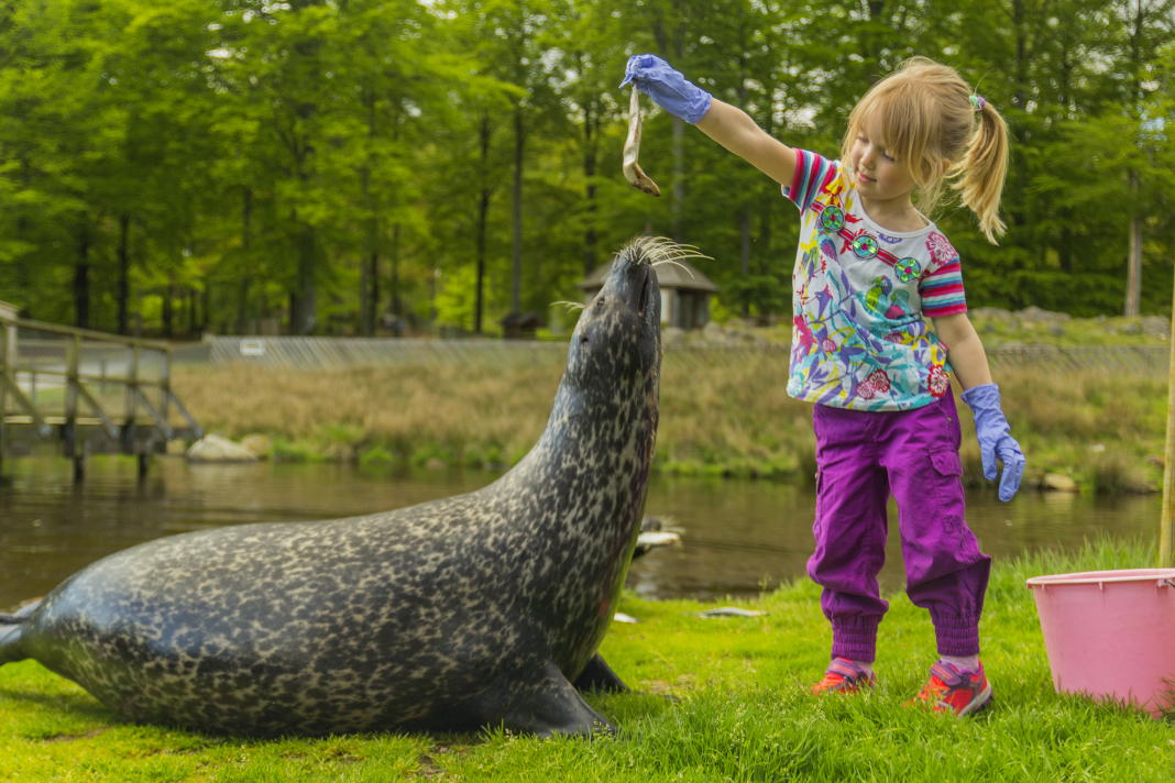 The seven best zoos in Sweden - Swedentips se